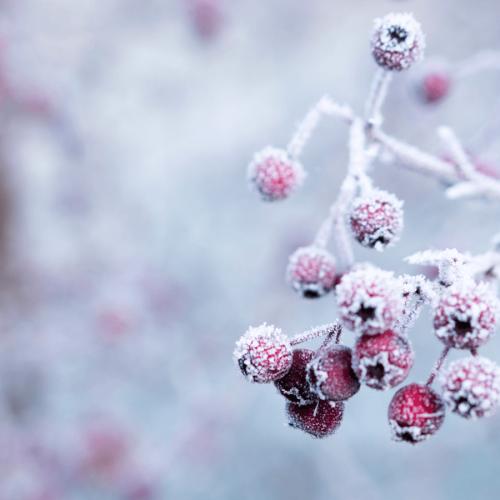 3 slow recept házilag, ami ápol és véd a csípős hidegben